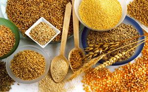 céréales dans l'alimentation du beauceron